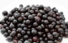 Сорт смородины черной: Баррикадная