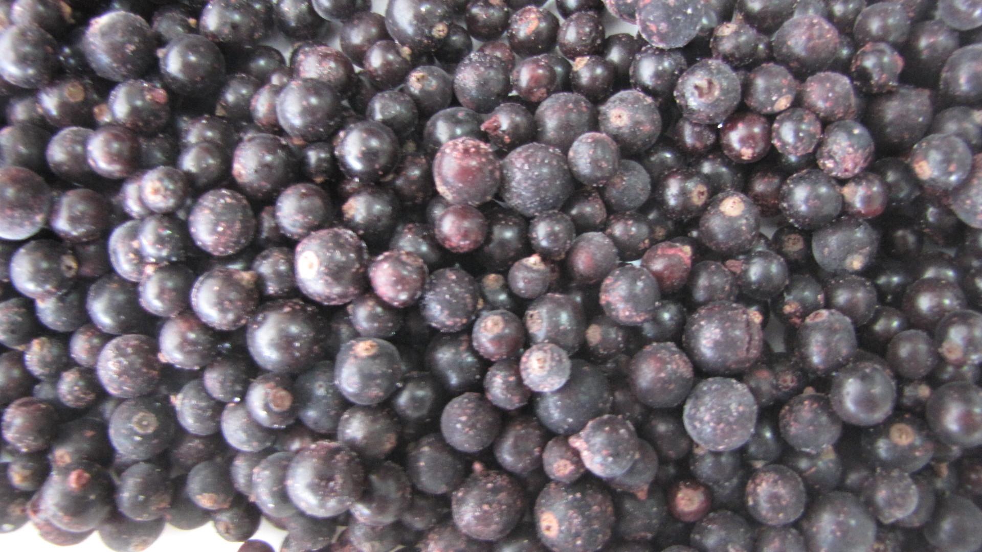 Сорт смородины черной: Деликатес