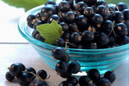 Сорт смородины черной: Соловьиная ночь