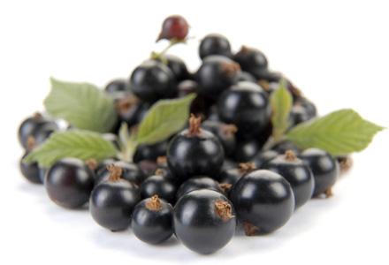 Сорт смородины черной: Зуша