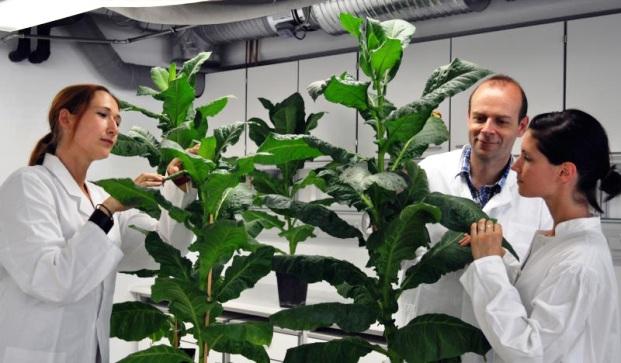 Ученые подарили растениям вечную молодость