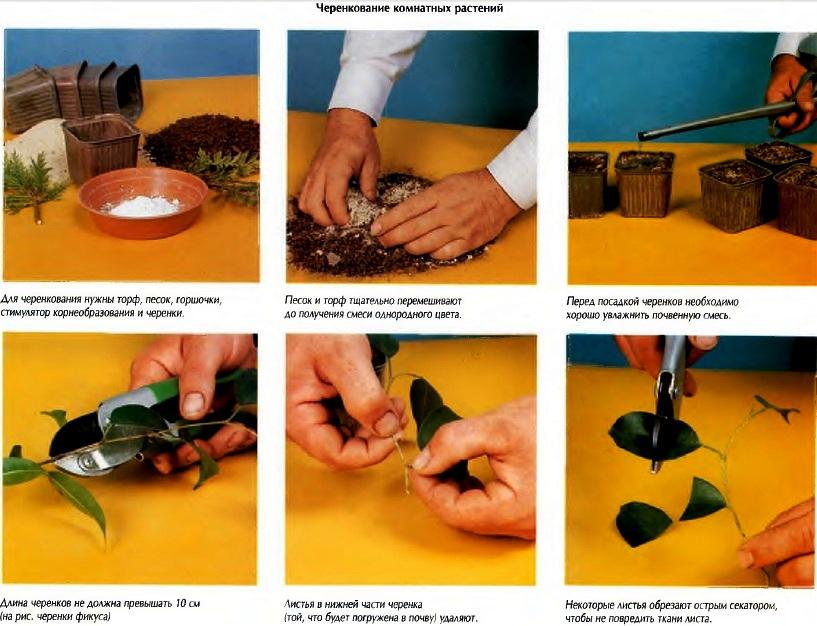Как посадить бонсай не из семян в домашних условиях 37