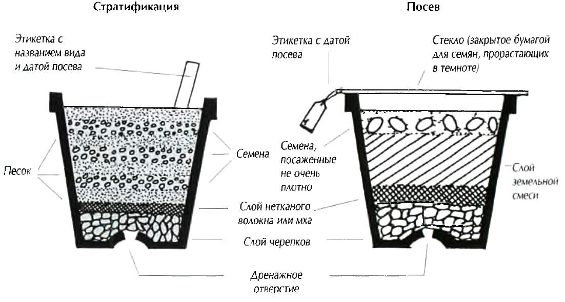 Как посадить бонсай не из семян в домашних условиях 162