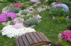 «Сад бабочек»