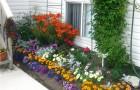 «Вечная весна»