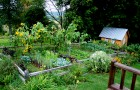 Аллергия на огород