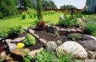 Архитектурные растения