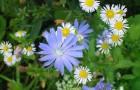 Белый и синий