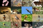 Биоразнообразие помогает защитить природу от человека