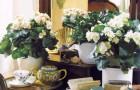 Борьба с вредителями комнатных растений народными средствами