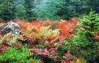 Чему садовые растения могут поучиться у диких