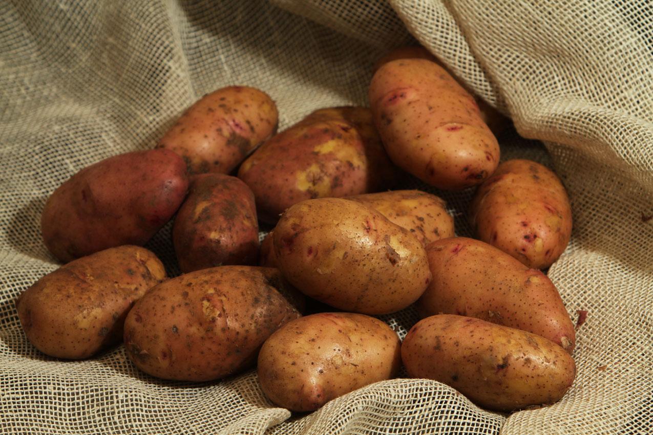 Что делать с семенным материалом картофеля?