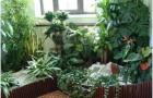 Что мешает расти и цвести комнатным растениям?