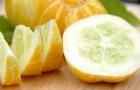 Что такое огурец-лимон?