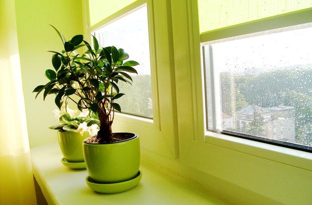 Что такое правильный свет для комнатных растений?
