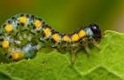 Гармоническое равновесие растений и животных с вердителями