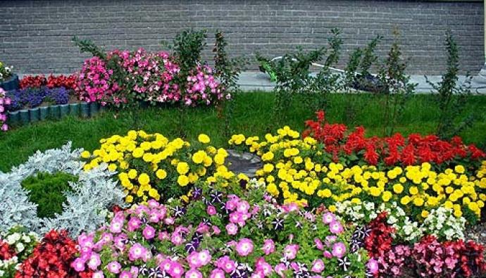 Холодные цветники