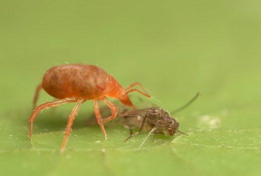 Как бороться с паутинным клещем?