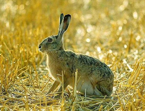 Как бороться с зайцами?