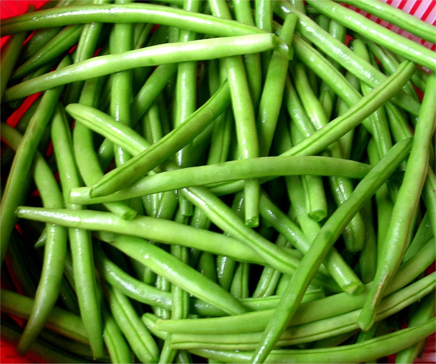 Как добиться хорошего урожая фасоли