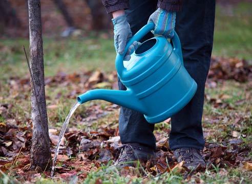 Как и чем лучше подкармливать деревья?