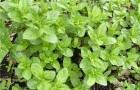 Как использовать пряновкусовые травы?