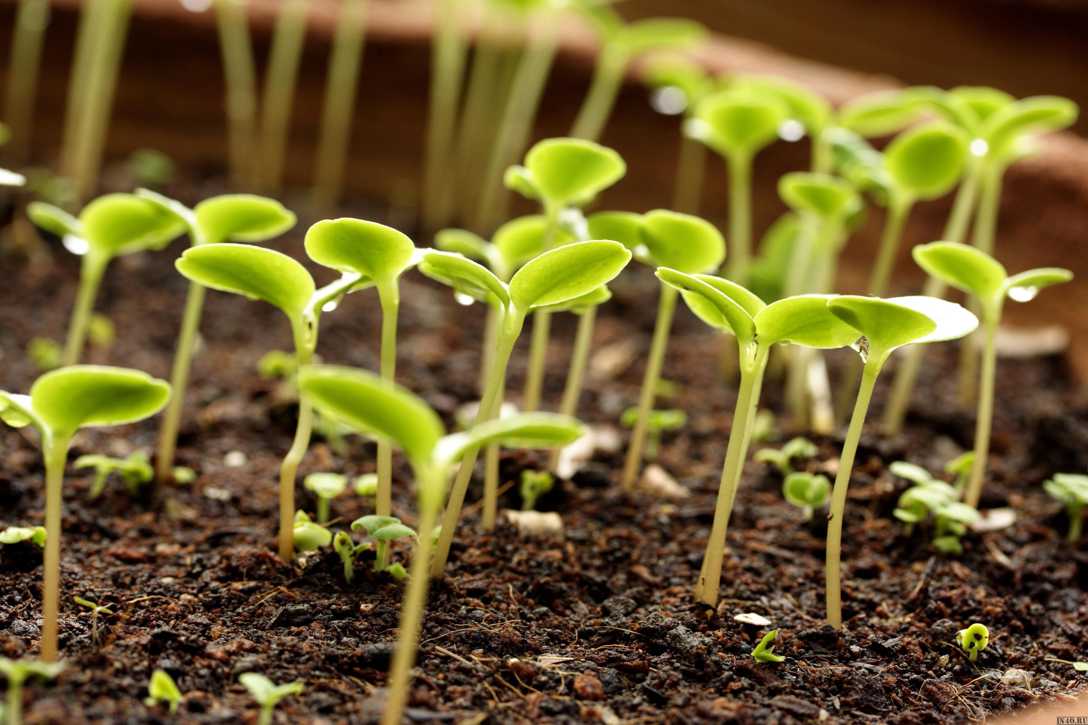 Как лучше сеять семена