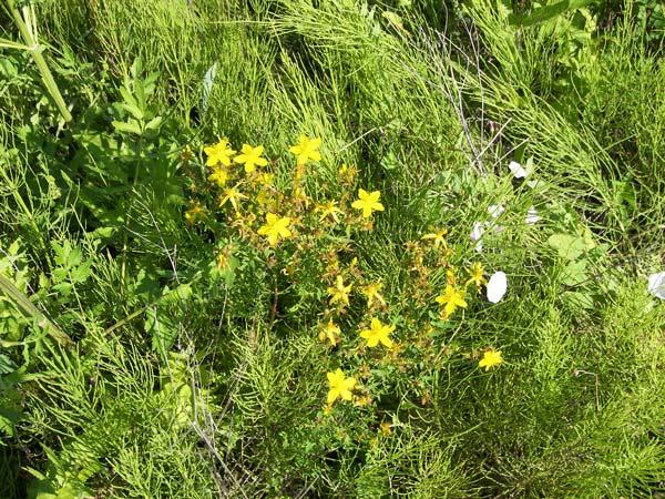 Как остановить наступление сорной травы?