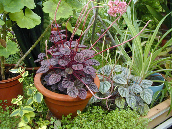 Как подкармливать комнатные растения?