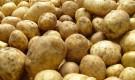 Как получить ранний урожай картофеля?