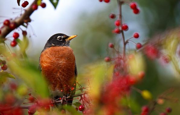 Как спасать ягоды от птиц?