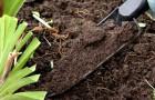 Как ухаживать за землей в молодом саду?