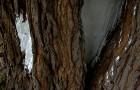 Как заделать дупло в дереве?