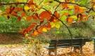 Какие работы необходимо проводить  в саду осенью?