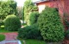 Каким способом лучше выращивать деревья?