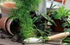 Какую землю лучше использовать при пересадке комнатных растений?