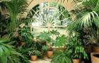 Комнатные растения в вашем доме