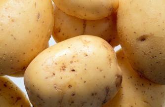 Можно ли сажать подмороженный картофель?