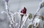 Неблагоприятное воздействие похолодания