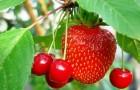 Новый метод селекции выявит урожайность до посева