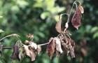 Основные причины гибели растений
