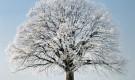 От чего зависит зимостойкость деревьев