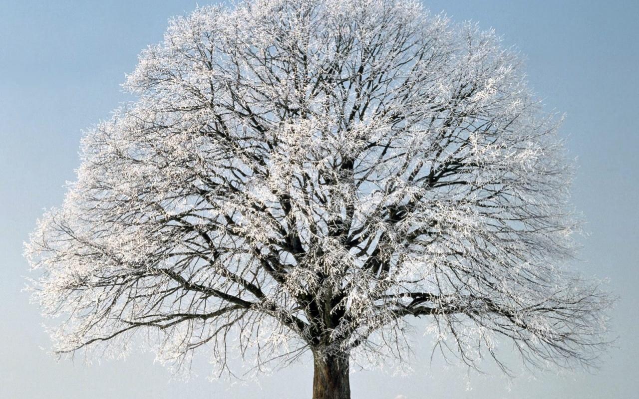 От чего зависит зимостойкость деревьев?