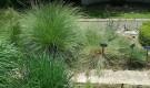 Овсеница (фестука) на альпийской горке