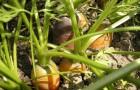 Плохая совместимость растений