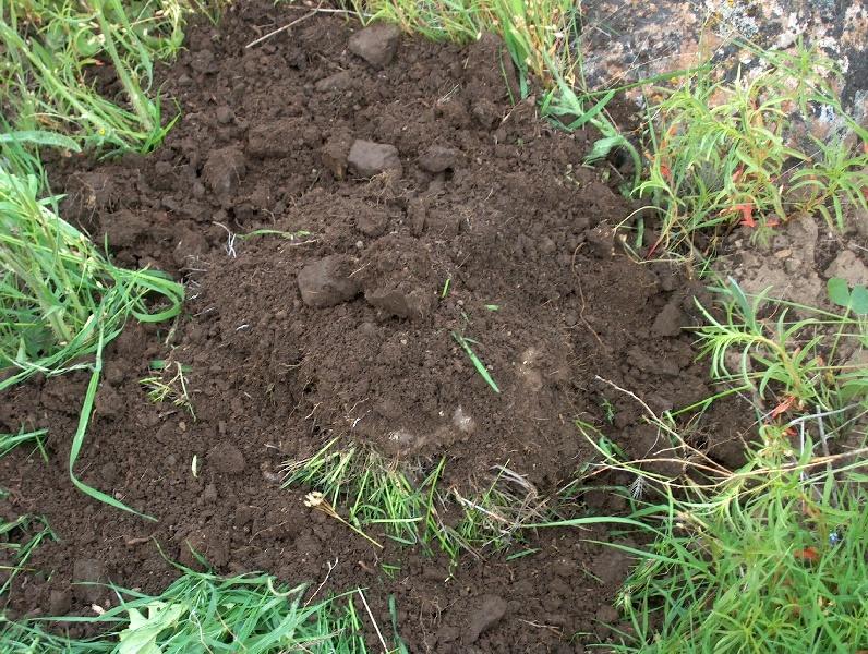 Почему почва не плодородная?