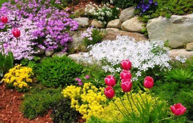 Подбор растений для альпийской горки