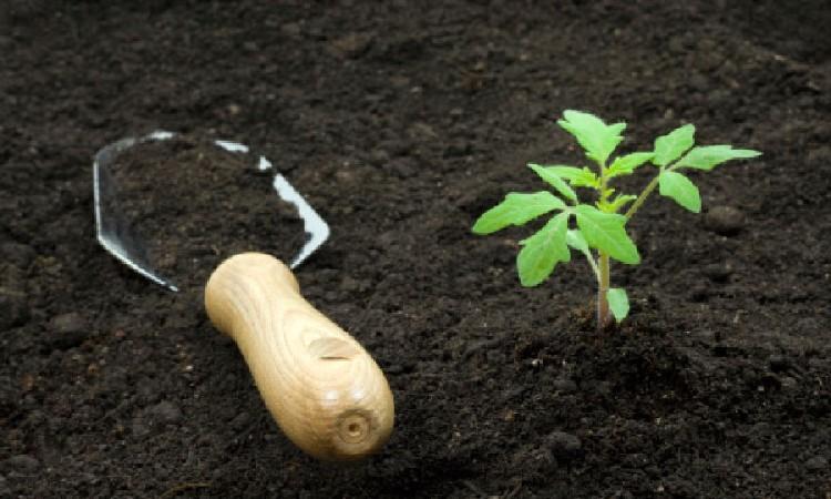 Поддержание плодородия почвы