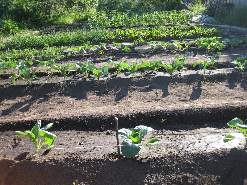 Поддержка для растений