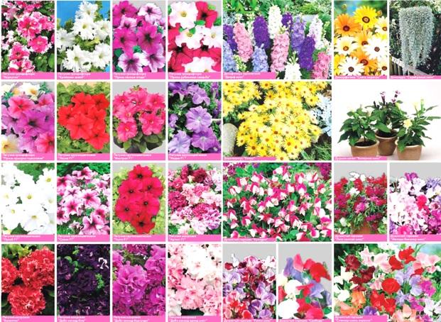 Правила отбора семян цветов
